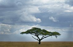 """So Africa"" -Serengeti National Park Tanzania"