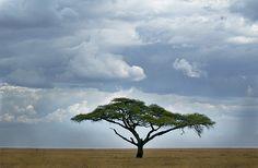 """So Africa"" -Serengeti National Park Tanzania"
