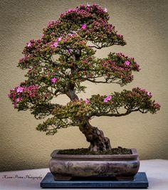 Beautiful Bonsai Trees