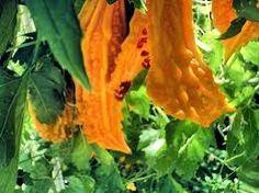 Natürlich Gesund: Blutzuckersenkende Heilpflanzen   Blutzuckersenken...