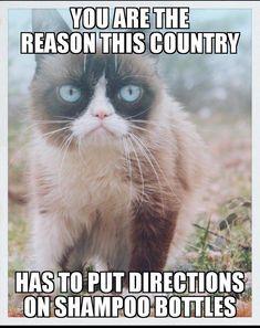 I am 😂 funny grumpy cat memes, grumpy kitty, grump cat, grumpy Grumpy Cat Quotes, Funny Grumpy Cat Memes, Funny Animal Jokes, Cute Funny Animals, 9gag Funny, Funny Animal Pictures, Funny Shit, Cute Cats, Funny Cats