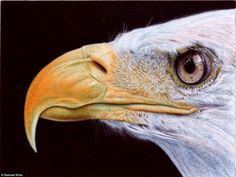 Ballpoint pen drawings -After finishing this work, Silva said: 'Eight hours to finish. Just another quick doodle. Or call it a study or sketch. My first eagle head ever.'