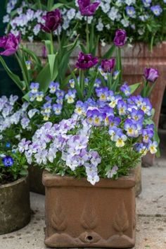 Spring containers for planting your bulbs and planting little violas to add colour to your display. Garden Trellis, Garden Pots, Potted Garden, Garden Ideas, Fall Containers, Plant Containers, Beautiful Gardens, Beautiful Flowers, Container Flowers