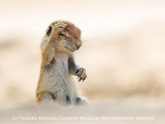 Comedy Wildlife Photography Awards Finalists #cute #funny #animal