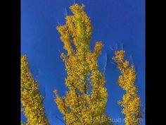 Roseville CA, located in the greater Sacramento Metro area, has lovely fall foliage and colors throughout our sweet city. Autumn, Fall, Sacramento, California, Joy, Seasons, Painting, Fall Season, Fall Season