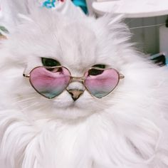 it's who you are cool cats Cool Cats, Kittens Cutest, Cats And Kittens, Cutest Pets, Cute Baby Animals, Funny Animals, Gatos Cool, Cats Tumblr, Cute Cat Wallpaper