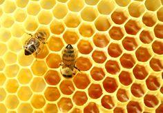 scinexx | Wie gefährlich ist das #Pestizid #Thiacloprid?: Streit um Gefahr für #Bienen durch den Wirkstoff geht vor Gericht - Honigbienen, Pestizide, Neonicotinoide Thiaclomid, Wildbienen, Bienensterben, Insekten, Bestäubung, Landwirtschaft, Obst, Gemüse