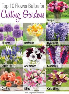 If you love making fresh flower arrangements, planting a cutting garden is the best way to ensure you always have an abundance of beautiful, homegrown flowers on hand. Full post here: http://www.longfield-gardens.com/article/Top-10-Flower-Bulbs-for-Cutting-Gardens