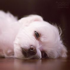 """This is exactly how I feel about it being """"just Tuesday.....zzzz"""" #Ineedweekend…"""