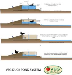 VEG Design Solutions Part Three How to Drain a Duck Pond Without Getting Poo on Your Hands Permaculture Research Institute Permacultur Backyard Ducks, Backyard Farming, Chickens Backyard, Duck Pens, Duck Farming, Duck Coop, Raising Ducks, Pet Ducks, Duck House