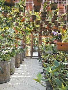 orquidário 4 mil plantas