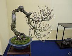 Bonsai shows en tentoonstellingen in 2013 - Bonsai Empire Miniature Trees, Bonsai Garden, Growing Tree, Science Art, Ikebana, Japanese Art, Art Forms, Planter Pots, Gallery
