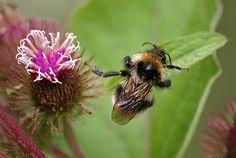 Wie Sie den Wildbienen aktiv helfen können | Kuriose Tierwelt