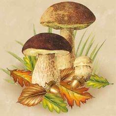 mushrooms for decoupage Botanical Illustration, Illustration Art, Scratchboard Art, Paper Napkins For Decoupage, Mushroom Art, Plant Art, China Painting, Botanical Prints, Illustrations