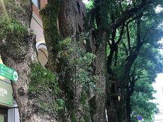 熊本で大好き場所です  ありがとう(з)- #オークス通り