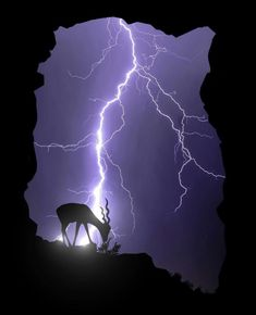 Beauty in all things … – storms do not last forever - PinPhoto. All Nature, Science And Nature, Amazing Nature, Lightning Photography, Nature Photography, Nature Pictures, Cool Pictures, Pictures Of Lightning, Storm Pictures