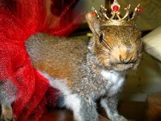 Anna Karenina the Squirrel as seen at Paris on Ponce in the Absinthe Vignette.