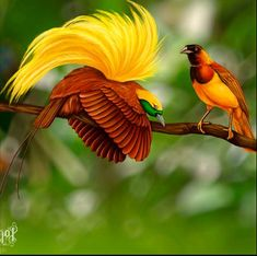 Photography Techniques birds of paradise - Bird Photography Ethics; Field Techniques and Composition Pretty Birds, Love Birds, Beautiful Birds, Animals Beautiful, Cute Animals, Tropical Birds, Exotic Birds, Colorful Birds, Papua Nova Guiné