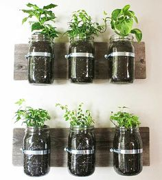 Are you thinking of growing an herb garden? Planting an herb garden has many benefits. They give you fresh herbs all year round, they provide beautiful greenery… Mason Jar Herbs, Pot Mason Diy, Mason Jar Herb Garden, Mason Jar Planter, Diy Herb Garden, Mason Jars, Canning Jars, Green Garden, Container Gardening