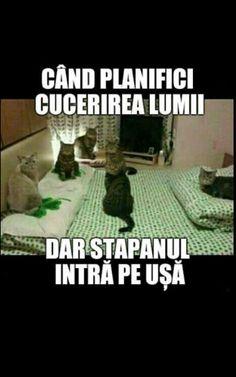 Funny Memes, Jokes, Romania, Lgbt, Wattpad, Humor, Princess, Comics, Face