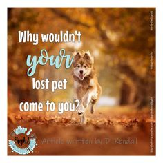 Why wouldn't your lost pet come to you? Its all about behaviour. Fight Or Flight Response, Personality Profile, All We Know, Singles Events, Survival Mode, Pet Search, Dog Barking, Article Writing, Have A Beautiful Day