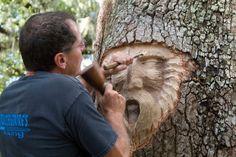 Esprits de la forêt par Keith Jennings - http://www.2tout2rien.fr/esprit-de-la-foret-par-keith-jennings/