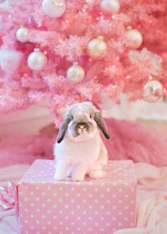 Penelope Christmas Bunny www.jenniferhayslip.com #bunny