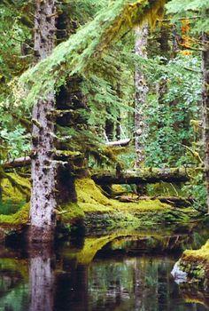 Images of Alaska - www.jfitzjournal.com - Rain Forest, Glacier Bay