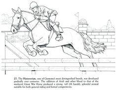 ausmalbilder pferde mit reiterin - ausmalbilder pferde kostenlos zum ausdrucken | ausmalbilder