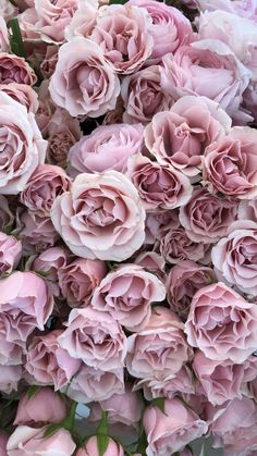 New Wallpaper Iphone Floral Pink Wallpaper Ideas - . New wallpapers iphone floral pink wallpaper ideas – Amazing Flowers, Pink Flowers, Beautiful Flowers, Pink Peonies, Paper Flowers, Flowers Pics, Exotic Flowers, Bouquet Flowers, Art Flowers