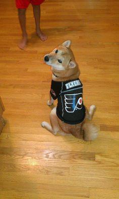 Shiba Inu in Flyers gear