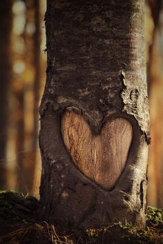 Tree Trunk Heart by Alvaro Hernandez Perez-Aradros
