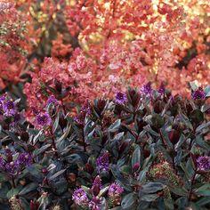 Colorful Shrubs for Your Garden