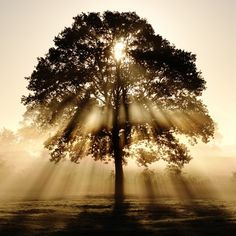 Let the light in. ~ETS #treehugger