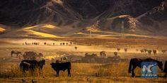 Kazak herdsmen in Ili of Xinjiang