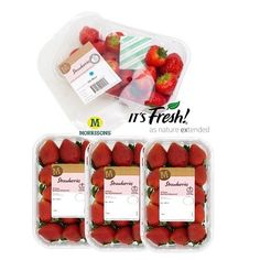 via @itsfresh: Strawberry season started early this year. Have you tried @morrisons sweet and aromatic #strawberries with @itsfresh  filter sheet inside the the package that helps to keep them naturally fresh and even tastier. #ItsFresh #FreshProduce #farmtofork #fresh #freshfruit #tasty #healthyliving #healthy #healthyeating #eatwell #eatclean #vegan #uk #morrisons #fruit #farmtotable #growers #fruit #fruits #produce #shelflife #fresher