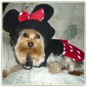 Girl Mouse Costume