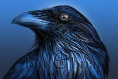 Quoth The Raven, Natural World, Whale, Colour, Bird, Twitter, Color, Birds, Whales