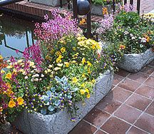 Container gardening tips from Chicago Botanical Garden