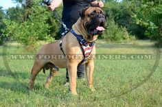 Choose Handpainted Leather Dog Harness for attack dog training and fashion walking. American flag pattern will add more zest to your pet's look. Leather Harness, Dog Harness, Dog Leash, Attack Dog Training, Dog Training Equipment, Dog Muzzle, American Pride, Dog Supplies, Dog Owners