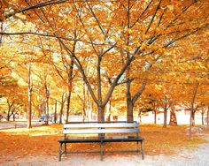 SALE Autumn Photography Fall Leaves Fall Photograph by BreeMadden, $24.00