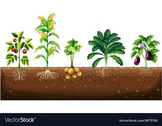 Different kinds of plants growing in the garden Vector Image Vegetable Chart, Vegetable Garden, Different Fruits, Different Kinds, Paper Fruit, Teacher Classroom Decorations, Fruit Crafts, Planting Sunflowers, Architecture Drawings