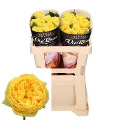 Rose Catalina is a lovely Yellow cut flower. As a rule of thumb, the taller the stem the larger the flower head & longer the vase life. July Flowers, Fresh Flowers, Rose Thorns, Most Popular Flowers, Wholesale Roses, Florist Supplies, Flowers Delivered, Flower Food, Plastic Flowers