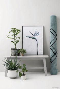 Affiches botaniques design par Vee Speers, Strelitzia reginae styled
