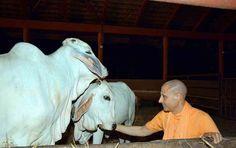 Global Sustainability Award to HH Radhanath Swami for Govardhan Eco Village