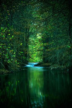 stream in the green
