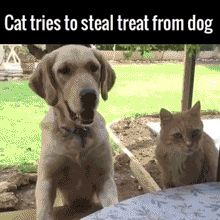Hahaha! Serves that cat right for trying to steal his treat! XD