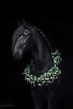Blackphoto of Friesian mare Dyke with a Christmas wreath!