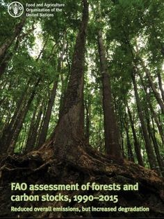 Las emisiones de carbono de los bosques disminuyeron un 25 % entre 2001 y 2015 | Infraestructura Sostenible | Scoop.it