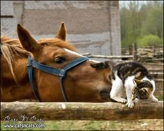 A horse sniffing a cat butt. #Funny #Cats #LOLcats